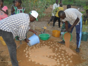 Technique de mise en germination de la Pomme de terre au jardin scolaire de Yarou 11