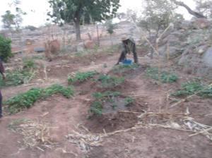 Visite au jardin arbres fruitiers de kansongo fÇvrier 2014. quelques personnes pratiquent le maraichage