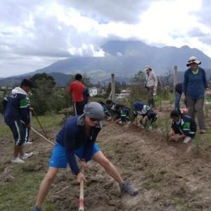la plantation de plantes médicinales dans les jardins scolaires Quichinche
